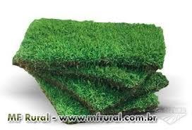 Preferidos Fornecimento e aplicação de grama em placa ou em rolo em Ipatinga  &QM87