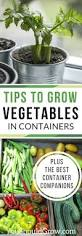 best 25 growing vegetables in containers ideas on pinterest