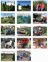 christmas tree farm storytelling imagined web design