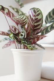 Best Plants For No Sunlight 25 Easy Houseplants Easy To Care For Indoor Plants