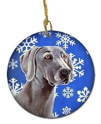 45 best weimaraner images on weimaraner gray and