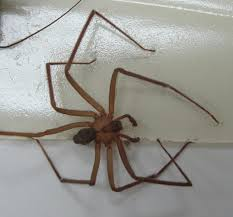 73 best spiders in north america images on pinterest spider