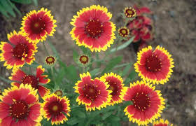 10 summer gardening tips to prolong flowers and plants new