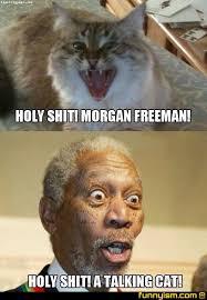 Talking Cat Meme - a talking cat lol cute animals pinterest talking cat and