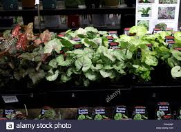 terrarium plants or indoor plants for sale at local nursery stock