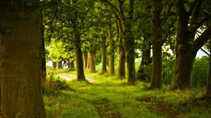 beautiful spring scenery wallpapers hd 6975642