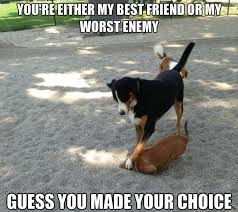 Funny Memes Pictures 2014 - best friend or worst enemy humordog funny dog pictures funny