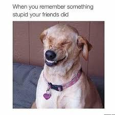 Smiling Dog Meme - funny dog meme credit memescorner note pinned from the