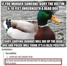Murder Meme - marrald is good at murder meme by limemorig memedroid