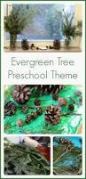preschool winter activities with evergreen trees preschool
