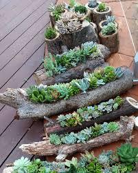 100 indoor succulent garden ideas indoor and outdoor succulent