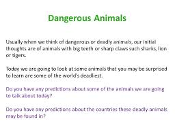 if you could be any animal discussion questions 1 what is your favourite animal why 2 if