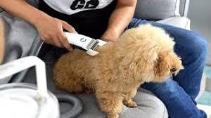 Gadgets For Pets 14 24 Mb Lagu 10 Useful Gadgets For Pets Gratis Download