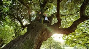 european tree of the year result northern ireland environment link
