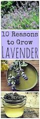 the 25 best herbs ideas on pinterest