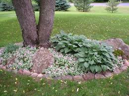 Backyard Ground Cover Options Best 25 Ground Cover Shade Ideas On Pinterest Ground Cover