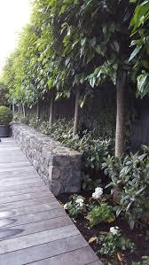 8 best garden images on pinterest natural privacy fences flat