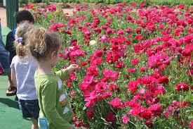 carlsbad flower garden mezzadri twins carlsbad flower fields