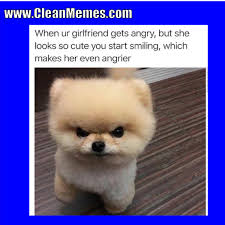Cute Dog Memes - dog memes clean memes the best the most online page 5
