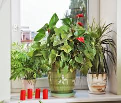 Indoor Plant Light by Five Easy Flowers To Grow In Small Spaces Apartmentguide Com