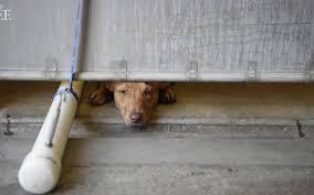 black friday pet adoption placer county spca offering pet adoption discount black friday