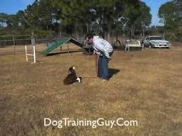 training a australian shepherd australian shepherd puppy training tips part one youtube