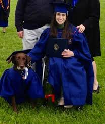 dog graduation cap and gown service dog named dons a cap and gown for graduation the frisky