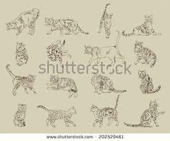 cat sketch stock images royalty free images u0026 vectors shutterstock