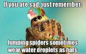 Sad Spider Meme - a spider de vilified ipm innovation lab