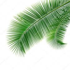 coconut leaves design background stock vector sarunyu foto