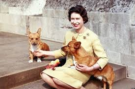 queen elizabeth dog queen elizabeth and her corgis an eight decade love affair