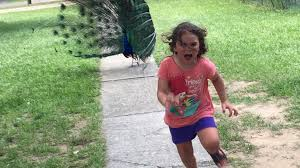 Running Girl Meme - girl running away from a peacock is so glorious she needed a