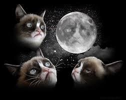 Three Wolf Moon Meme - i can has cheezburger three wolf moon funny animals online