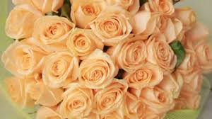 Peach Roses Gentle Big Bouquet Of Peach Roses Close Up Stock Video Footage