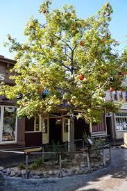 orange halloween tree photos the halloween tree disney darlings