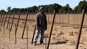 vineyard end post installation demonstration by vineyard industry