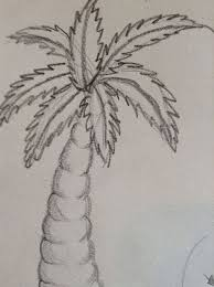 how to draw a palm tree 6 steps