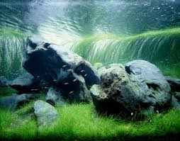 Marine Aquascaping Techniques 134 Best Aquascaping Awesomeness Images On Pinterest Aquascaping