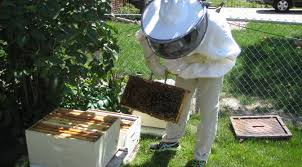 The Backyard Beekeeper What We Do Des Moines Backyard Beekeepers
