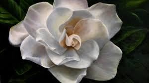 flower flowers sakura blooms breeze apple soft sprin blossoms