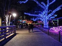 zoo lights houston 2017 dates of golden roses houston zoo lights