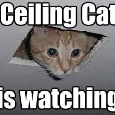 Watching You Meme - funny meme archives page 971 of 982 cat planet cat planet