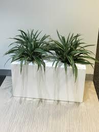 pots u0026 planters archives page 3 of 5 inscape indoor plant hire