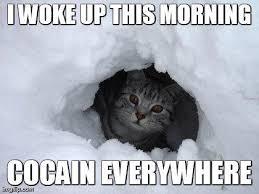 Cat Cocaine Meme - cocain cat cocaine bear know your meme