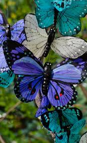 Beaitful by 524 Best Kelebek Images On Pinterest Beautiful Butterflies