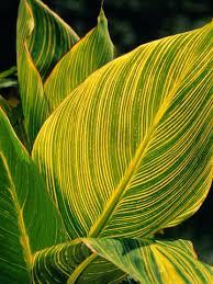 garden plants with a tropical flair