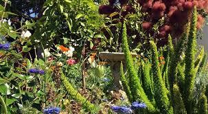 bay area garden landscape design build firm 650 361 1414