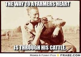 Funny Cow Memes - 20 of the internet s best livestock memes ranch house designs inc