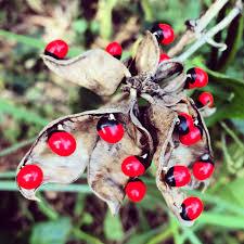 native plants in florida native plants living sanibel