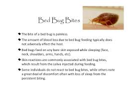 What Do A Bed Bug Look Like What Does A Bedbug Look Like 15 Images Rimedi Per La Cimice